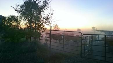 Dust at dusk