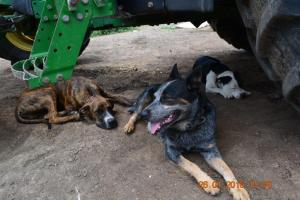 The 'D' team are performing supervisory tasks – Chip is behind the tyre claiming territorial rights…